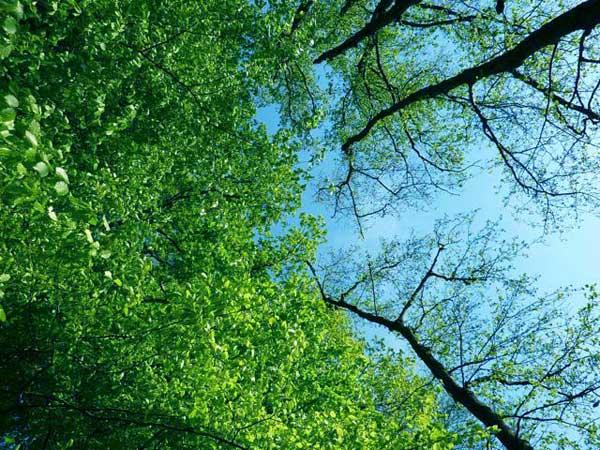 8.CQhoutbewerking-bomen